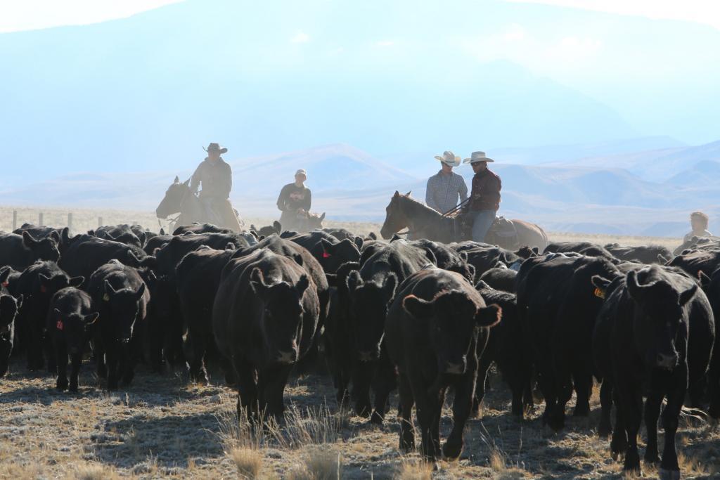 Men on cattle ranch at Beartooth Men's Rehab